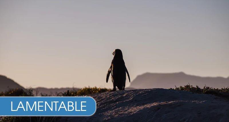 Un pingüino muere tras ingerir un tapabocas N95